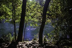 The Great Boise River. The Boise river flows behind the trees and the river bank royalty free stock photos