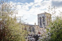 Great british cathedral. Looking through trees at york cathedral Stock Images