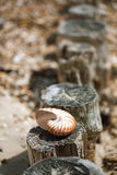 Great British summer pebble beach with sea shell Stock Photo