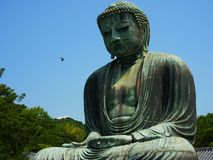 Great buddha Stock Photography