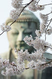 The great buddha in Kamakura Japan / Daiputsu. The great buddha in Kamakura Japan. Statue also known as Daiputsu. In the front is cherry blossoms Stock Image