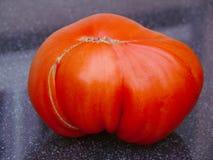 Great bull heart tomato. Stock Photography