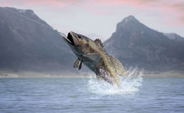 Great Catch. Rendering of a largemouth bass jumping out of the water Royalty Free Stock Photography