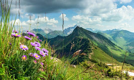 Great clear view from high mountain with flowers in foreground. Great clear view from high mountain over other peaks in summer or spring. Some purple flowers Stock Images