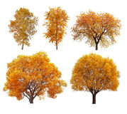 Great collection of autumn trees Royalty Free Stock Images