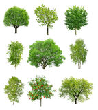 Great collection of deciduous trees Royalty Free Stock Photos