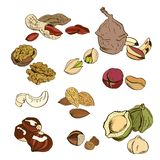 Great collection of highly detailed hand drawn. Nuts, colored. Vector illustration Stock Image
