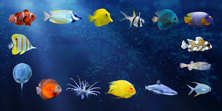 Great collection of a tropical fish Royalty Free Stock Photography