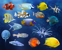 Great collection of a tropical fish Royalty Free Stock Images