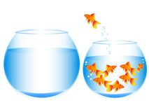 Great concept of breaking the golden fish into a new life. On the white background vector illustration