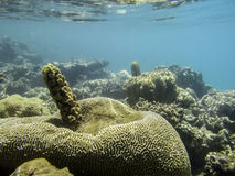 Great coral reef red sea Stock Photo