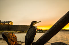 Great cormorant bird sitting on anchor during sunset Royalty Free Stock Photography