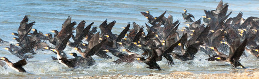 Great Cormorant Lake in northwestern Mongolia Stock Photos