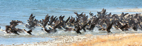 Great Cormorant Lake in northwestern Mongolia Stock Image