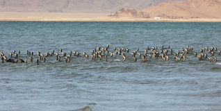 Great Cormorant Lake in northwestern Mongolia Royalty Free Stock Images