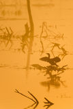 Great cormorants in the fog Royalty Free Stock Photos