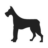 Great Dane Black Silhouette. Vintage vector image of a black silhouette of a thoroughbred Great Dane dog standing straight isolated on white background looking Stock Images