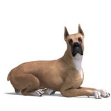 Great Dane Dog Royalty Free Stock Photo