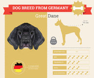 Great Dane Dog breed  infographics. Stock Photos