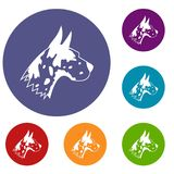 Great dane dog icons set. In flat circle reb, blue and green color for web Stock Photography