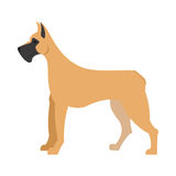 Great dane dog. And large doggy pet, domestic mammal vector illustration Royalty Free Stock Images