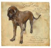 Great Dane (German Mastiff) - An hand drawn vector illustration Royalty Free Stock Image
