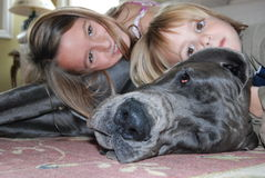 Great dane with kids. Great dane puppy being loved by 2 kids Stock Images