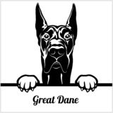 Great dane - mirando a escondidas perros - - cabeza de la cara de la raza aislada en blanco ilustración del vector