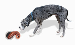 Great Dane and the Octopus. Stock Photos