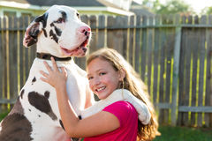 Great dane stand up on kid girl shoulders playing Royalty Free Stock Photo