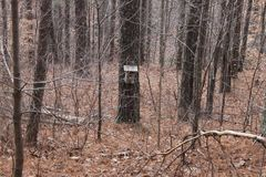 Bird house at the forest. Great day to walk or run at the forest bird house perfect to relax stock photos
