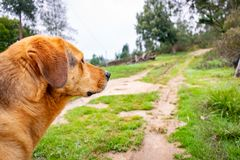 Great dog looking at the mountains surrounded by nature royalty free stock photo