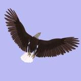 Great Eagle Stock Photo