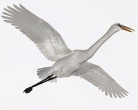 Free Great Egret Stock Image - 42826791