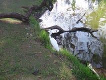 White heron on the lake shore Stock Image
