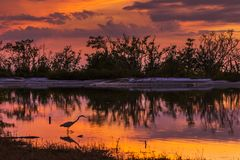 Great Egret silhouetted in a lagoon at sunset - Est Stock Image