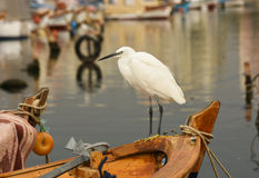 The Great Egret  Ardea alba . White heron standing on a boat in marina. Stock Photography