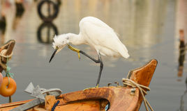 The Great Egret  Ardea alba . White heron standing on a boat in marina. Stock Image