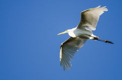 Great Egret Flying in a Blue Sky Royalty Free Stock Photo