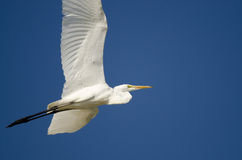 Great Egret Flying in a Blue Sky Stock Photo