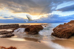 Great egret at sunset Stock Images