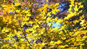 Great Fall Colors. Stock Photography