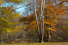 Great Falls state park in autumn in Virginia, USA. Stock Photos