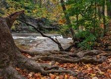 Great Falls van de Kloof van de Blikslagers` s Kreek Royalty-vrije Stock Foto's