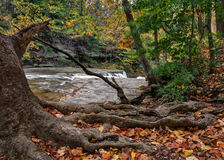 Great Falls von Stümper ` s Nebenfluss-Schlucht Lizenzfreie Stockfotos