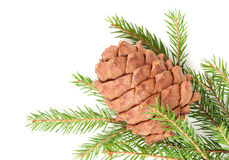 Great fir cone Royalty Free Stock Image