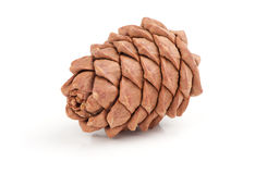 Great fir cone Royalty Free Stock Photography