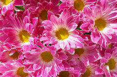 Great flower background Royalty Free Stock Photos