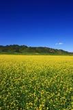 Great Flowers Field Stock Image