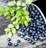 Great Fresh Blueberries in a bowl jar with big leaves on wooden Royalty Free Stock Photo